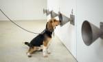 Narkotik köpekleri, Kovid-19 vakalarını testlerden bir hafta önce tespit edebiliyor