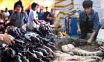 DSÖ: Canlı hayvan pazarlarını kapatın