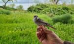 8 gramlık kuştan şaşırtıcı hız!