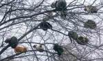Siz hiç kedi açmış ağaç gördünüz mü?