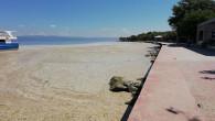 Darıca kıyılarından her gün 2.5 ton müsilaj toplanıyor