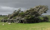 Dünyanın en güzel16 ağacı