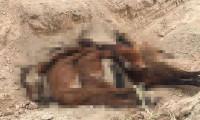 Konya'da ki çiftlikte korkunç manzara