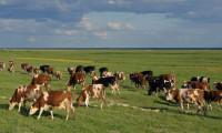 Hayvan ithalatı özel sektöre açılıyor