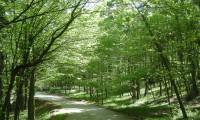 Orman alanları şirketlere satılacak