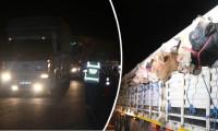 Kurbanlıklar İstanbul'a gelmeye başladı