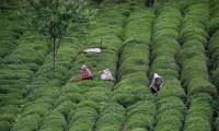 Çay üreticileri için önemli haber