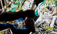 Balık stokları tükeniyor uyarısı