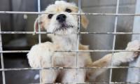 Hayvanlara kötü muameleye 2 yıl hapis