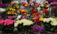 Çiçek satışları 10 kat arttı