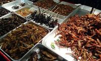 Yenilebilir böceklerde salgın ve istila tehlikesi