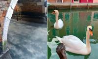 Karantina sayesinde Venedik'in ünlü kanalları temizlendi