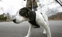 Köpekler günde iki defa yürüyüşe çıkarılacak