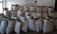 Bakan Soylu açıkladı: Tonlarca esrar, 14 milyon kök keneviri