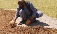 BM: Afganistan'da 14 milyon kişinin gıda güvenliği yok
