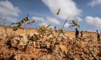 Somali'de çekirge istilası nedeniyle OHAL ilan edildi