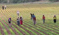 Tarım Kredi üreticilere 3,3 milyar liralık sabit oranlı kredi kullandırdı