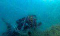 Marmara Denizi'nin dibindeki müsilaj görüntülendi!