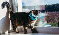 Dünyanın konuştuğu karar! Kedilere sokağa çıkma yasağı