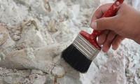 Kanada'da 890 milyon yıllık fosil bulundu: En eski hayvan fosili olabilir
