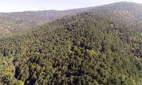 Bilecik'te ormanlara giriş yasağı