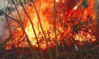 Samsun Bafra'da korkutan yangın
