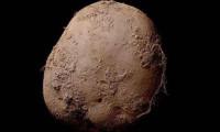Patates fotoğrafı 1 milyon euroya alıcı buldu