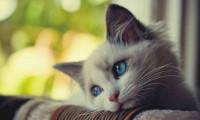 'Seri kedi katili' için polis alarmda