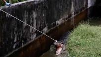 Kadın yiyen katil timsaha 3 saat süren yakalama operasyonu