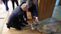 Sırbistan'da Putin'e görkemli tören! Köpek hediye edildi