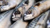 En fazla omega 3 içeren balık somon değil, uskumru!