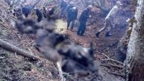 HES'in kuruttuğu dereye su bulmak için atlayan mandalar öldü