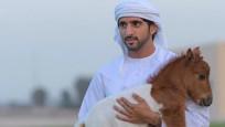 Dubai'nin veliaht prensi sosyal medyanın gözdesi