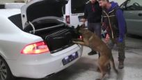 Polis memuru 121 kilo esrarla yakalandı
