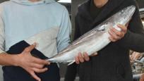 Palamut yerine tombik balığı satıyorlar
