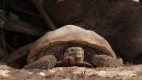 Kaplumbağalara ait bir köy: 'Keur Mbonatt Yi'