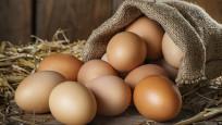 Organik yumurta nasıl anlaşılır?