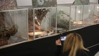 Zagreb'de En zehirli yılanlar sergilendi