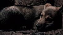 Pati Dokunuşu konseri ile hayvan katliamına 'Dur' çağrısı