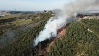 İstanbul Kartal'da orman yangını
