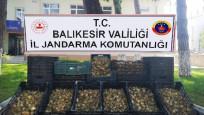 Evdeki 6 bin 300 zambak soğanı için 60 bin lira ceza