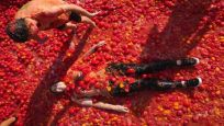 St. Petersburg'da domates savaşları