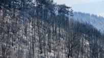Pakdemirli'den İzmir'deki orman yangınıyla ilgili açıklama