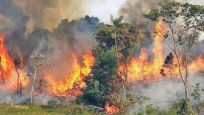 Amazon yangınları için ordu devrede