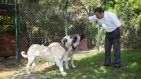 Hayvan haklarını savunmak için 'hayvan polisi' kurulacak