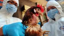 Yumurta üreticilerinin 'kuş gribi' sevinci