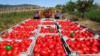 Rusya'ya domates ihracatı 2019'da yüzde 186 arttı