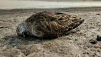 İran'da 6 bin göçmen kuş telef oldu