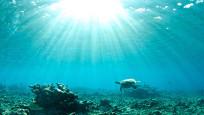 Okyanus sıcakları alarmı! Afet patlaması uyarısı