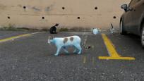 Küçükçekmece'de mavi kediler görenleri korkuttu!